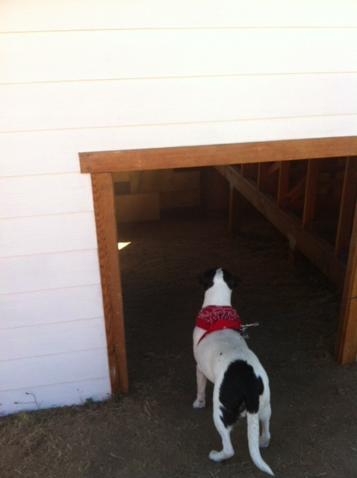 A Dog's Blog: Rupert visits the Olympic Sculpture Park