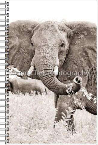 NOTE-ELEPHANT