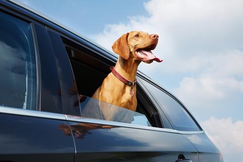 It's Hot in the Back Seat | Tulsa Auto Care