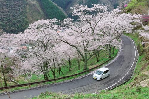 Springtime Car Care   Bixby Auto Care