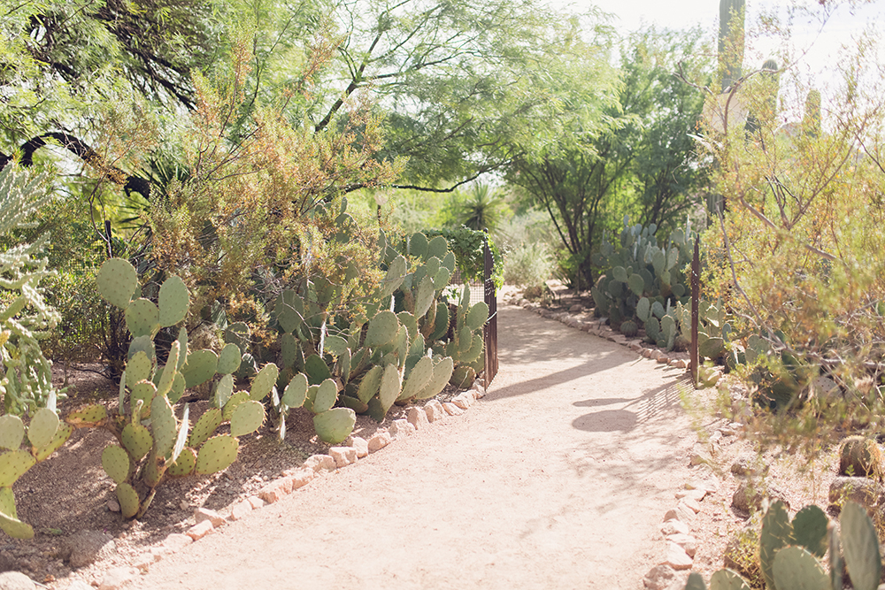 Visiting the Desert Botanical Garden in Phoenix, Arizona!