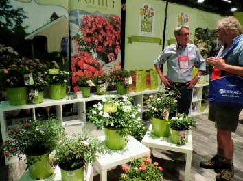 Talking roses at the Star Roses booth