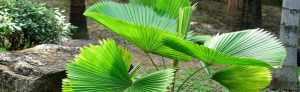 www.palmensamen.ch