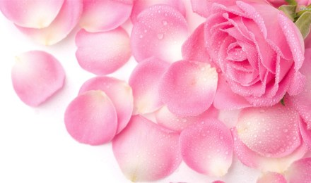 HD-Wallpapers-1080p-Pink-Rose-Petals-2