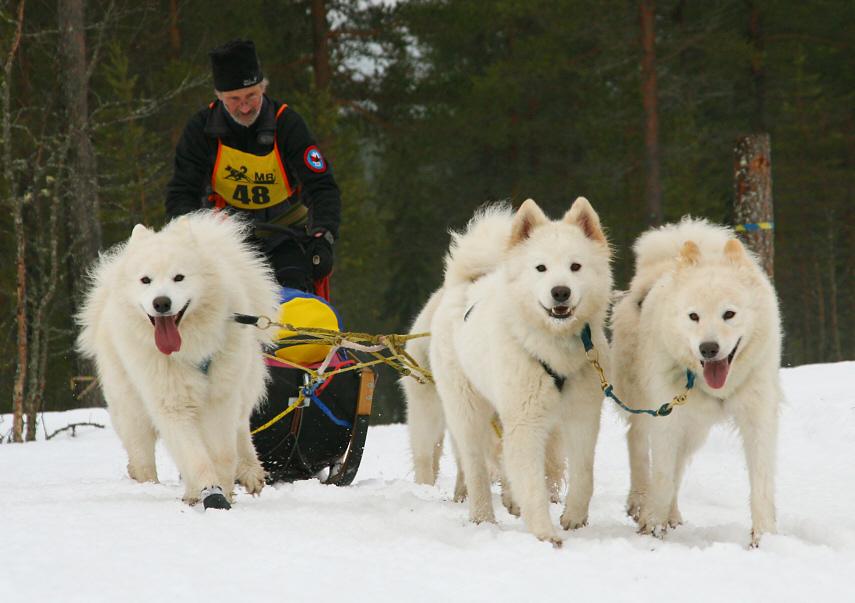 Polar Distance 08, Team Harry