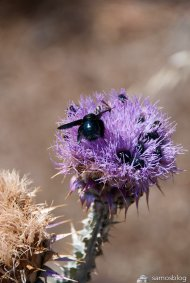 Thistle with visitors