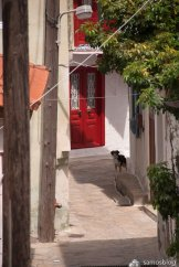 Narrow street and dog
