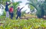 Hutan Mangrove Desa Ujung Pandaran Akan Disulap Jadi Destinasi Wisata Oleh Dishut Kalteng
