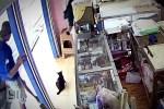 Pria di Sampit ini membunuh kucing dengan sadis