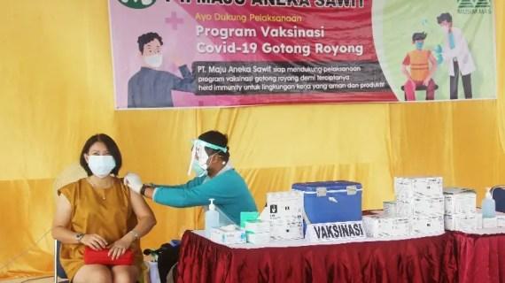 PT Maju Aneka Sawit gelar vaksinasi COVID-19 untuk 2.000 pekerja dan keluarganya