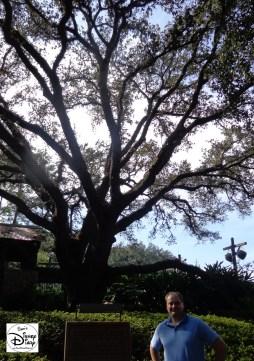 "Port Orleans Riverside: Ol Man Island features the ""Majestic Live Oak"""