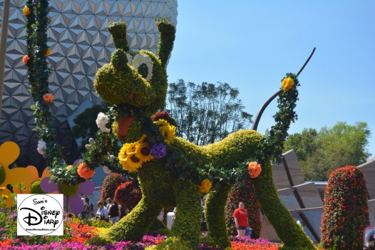 The 2017 Epcot International Flower and Garden Festival - The Entrance Topiary, Welcome to Spring Fun, Food and Flowers Pluto