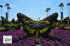 The 2017 Epcot International Flower and Garden Festival - Butterflies, near the butterfly house