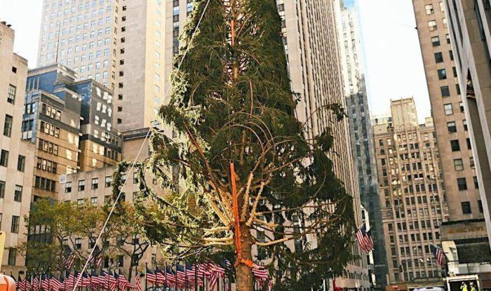 Вот уже много лет подряд у Рокфеллер-центра устанавливают главную нью-йоркскую елку