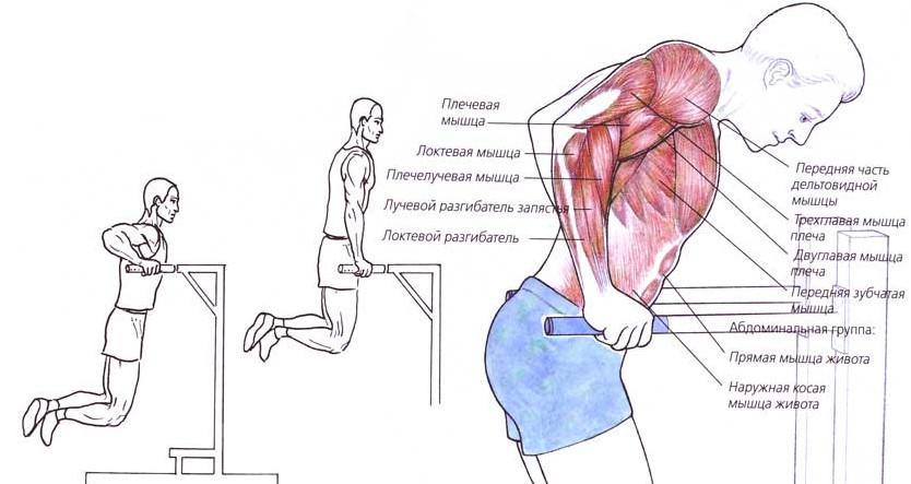 deteriorarea articulației umărului pe barele inegale toate oasele și articulațiile doare în timpul menopauzei