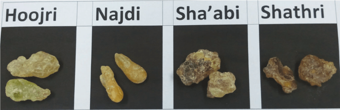 Four-commercial-grades-of-Omani-frankincense