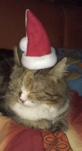 Cleo unsere Weihnachtskatze