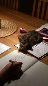 Matz überprüft die Hausaufgabe!