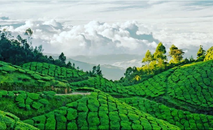 Here's Why One Trip Is Not Enough To Experience The Heaven Called Munnar
