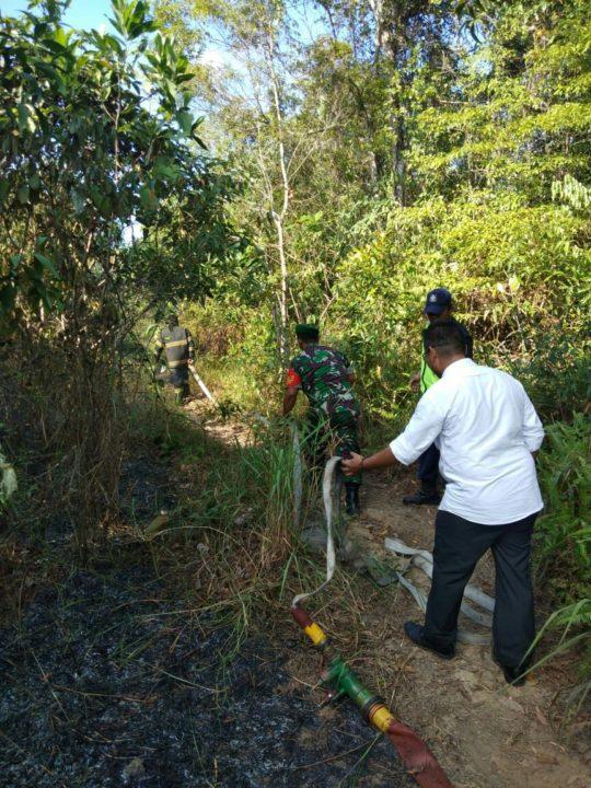 Si Jago Merah Mengamuk di Hutan Kawasan Muka Kuning Batam
