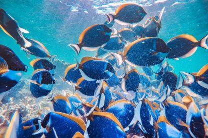 3 Point Maldives Snorkeling Trip