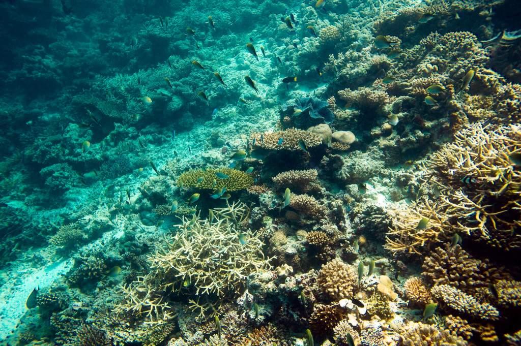 Coral Garden Maldives Snorkelling Tour