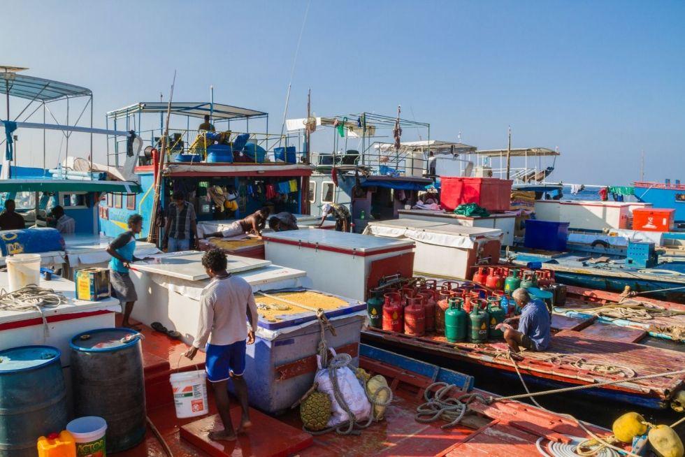 Visit the Local Fish Market in Malé, Maldives