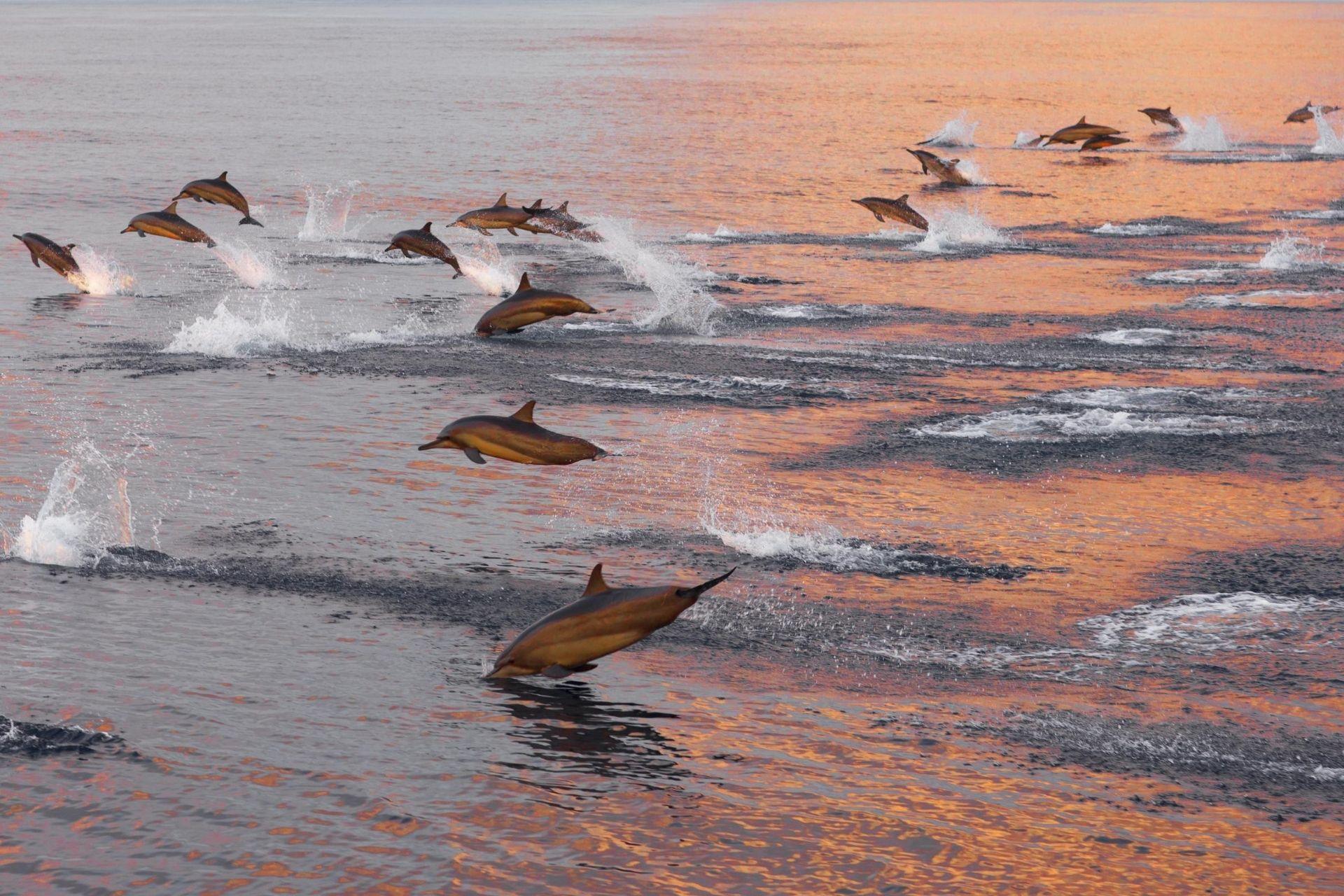 Maldives Sunset Dolphin Cruise Evening Trip