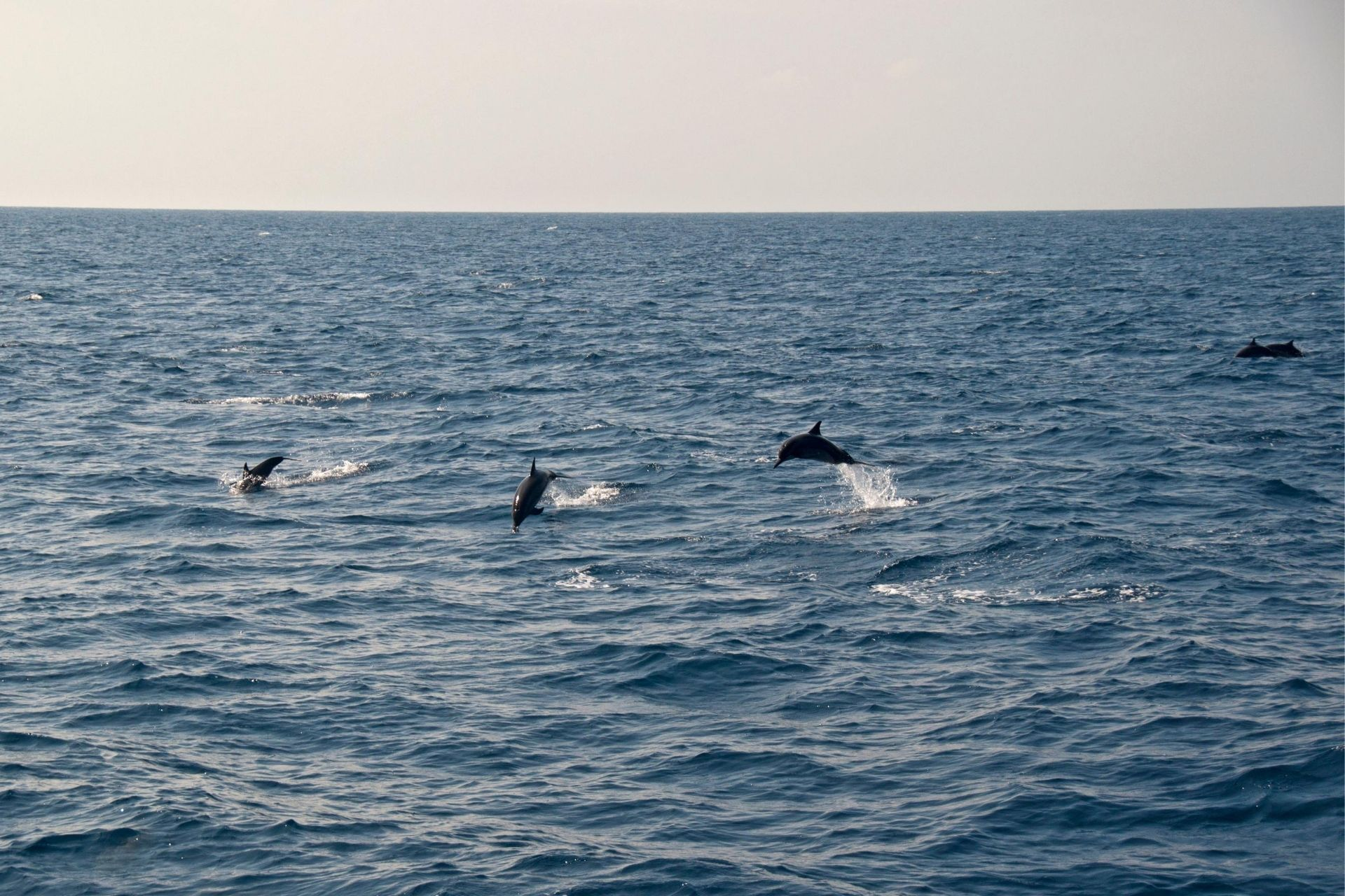 Maldives Sunset Dolphin Cruise Picnic