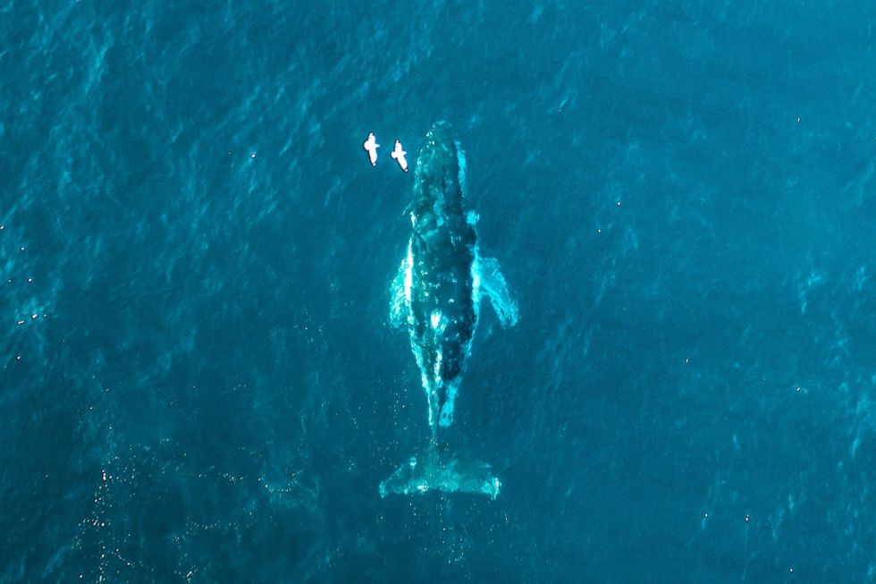 Whale Watching in the Maldives