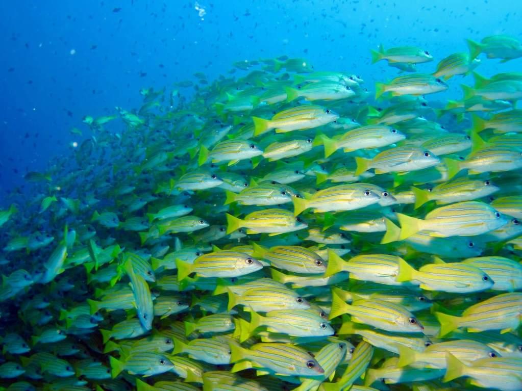 Nakolhu Giri Maldives Snorkelling Tour