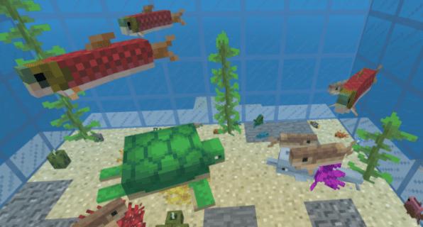 Aquarium-Blog-2.png