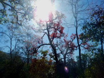 Roter Baum in Naturschutzpark