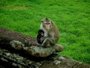 Mutter mit Jungem in Angkor Wat