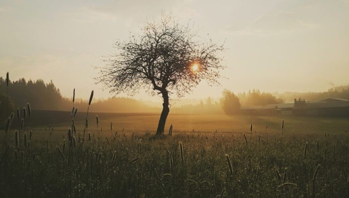 The Tenderness of God in the Fall of Man
