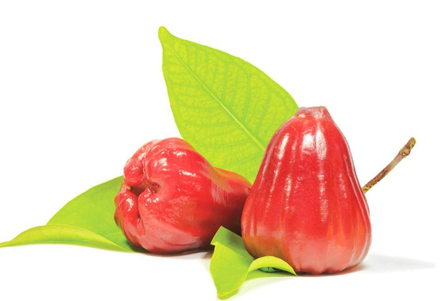 Rose Apple (Chom-Poo)