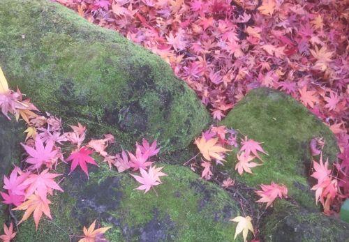 【24の季節とネクタイ】10/23~11/6頃は二十四節気のひとつ『霜降(そうこう)』です。朝晩冷え、山装い、霜が降りはじめますね。今年の十三夜は11月1日です。