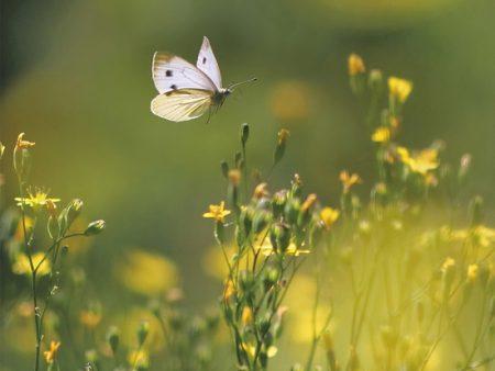 【24の季節とネクタイ】3/6~3/20頃は二十四節気『啓蟄(けいちつ)』陽気に誘われ土の中の虫が動き出すころ。黄砂やスギ花粉に、春嵐。三寒四温。ワラビにゼンマイ、タケノコ、鰆にハマグリ、サヨリに青柳。