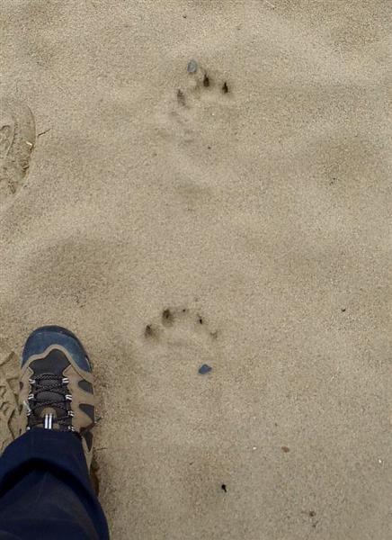 Bear appearance alert in Tottori sand dune