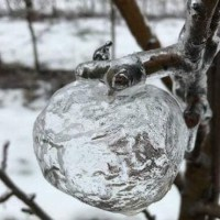 "【Image】 Ice-shaped ice ""Ghost apple"" is too beautiful www"
