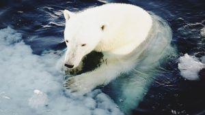 Arktis har haft extremt höga temperaturer under november och december, enligt en ny rapport – och på torsdagen var det runt 25 grader varmare än normalt i området. Konsekvensen: Storleken på isen vid Nordpolen kan bli rekordliten i sommar.