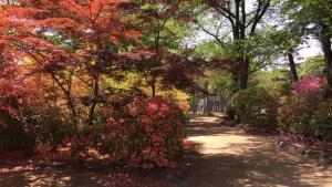沼田城の本丸
