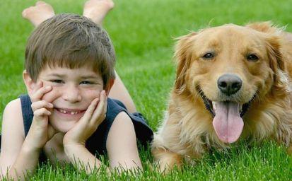 mascotas, perro, niños,
