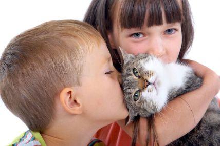 incineración mascota, cremación mascota, incineración animal, cremación animal, crematorio de mascotas, funeraria de mascotas, crematorio animales