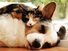 incineración mascota, incineración animal, cremación mascota, cremación animal, funeraria de mascotas, crematorio de mascotas