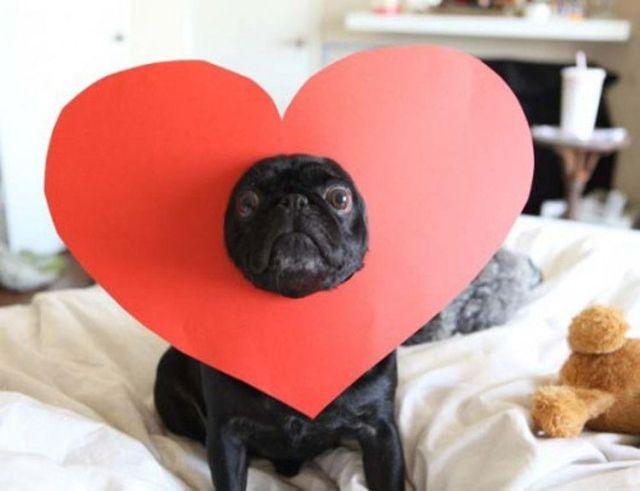 mascotas san valentín