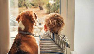 mascotas y divorcio 2