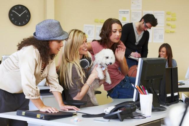 Día Internacional de llevar a la mascota al trabajo