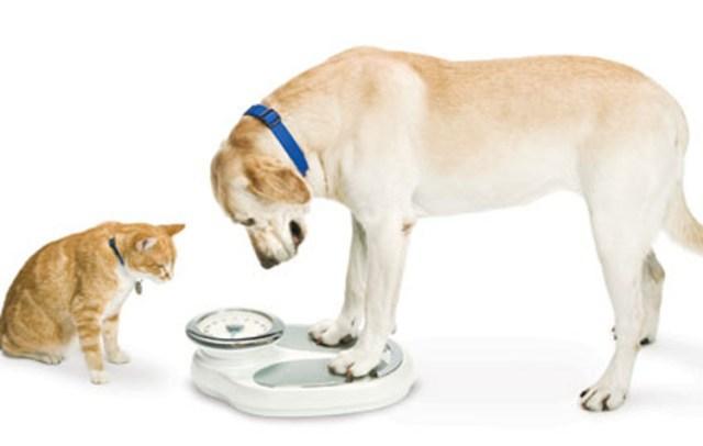 mascotas obesas
