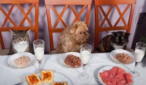Portugal regula la entrada de mascotas en locales de hostelería 2